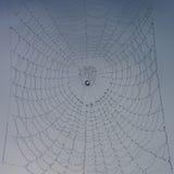 Toile d'araignée complètement des gouttes de rosée Images stock