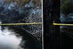 Toile d'araignée couverte de rosée sur la corde Photographie stock libre de droits