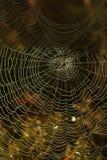 Toile d'araignée couverte en rosée de matin Autumn Moody Meadow photo stock