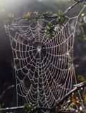 Toile d'araignée dans des rayons de rosée et de soleil Photos stock