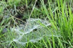 Toile d'araignée dans l'herbe Photographie stock libre de droits