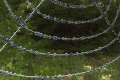 Toile d'araignée dans la forêt avec des baisses Image stock