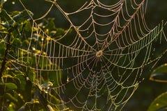 Toile d'araignée dans la rosée. Photos libres de droits