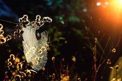 Toile d'araignée dans le marais photo stock
