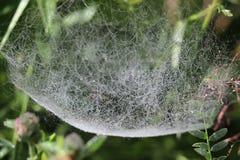 Toile d'araignée de baisse de rosée image stock