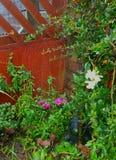 Toile d'araignée de jardin Photos stock