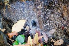 Toile d'araignée de passage couvert photo libre de droits