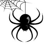 Toile d'araignée de vecteur et araignée Images stock