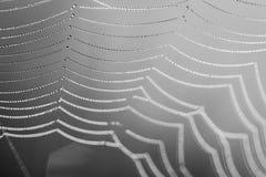 Toile d'araignée des perles, du balc et du macro blanc photo stock