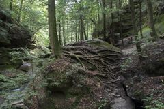 Toile d'araignée des racines d'arbre image libre de droits