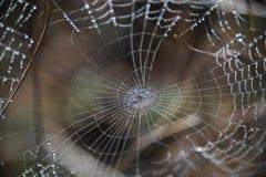 Toile d'araignée en nature photos libres de droits