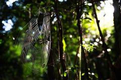 Toile d'araignée en parc Photos stock