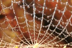 Toile d'araignée en rosée image libre de droits