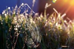 Toile d'araignée en rosée de matin Image stock