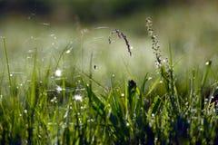 Toile d'araignée et araignée sur l'herbe Images libres de droits