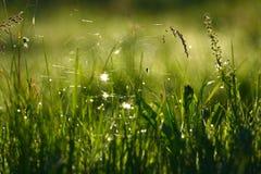Toile d'araignée et araignée sur l'herbe Photos libres de droits