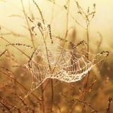 Toile d'araignée et rosée Photographie stock libre de droits