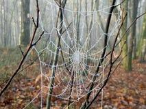Toile d'araignée figée Photos libres de droits