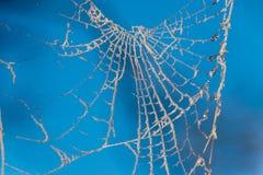 Toile d'araignée givrée Photo stock