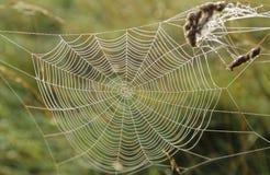 Toile d'araignée no.1 Photographie stock