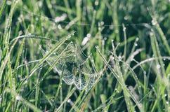 Toile d'araignée parmi les prés verts brillants Photographie stock libre de droits