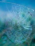 Toile d'araignée pendant le matin Image libre de droits