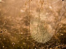 Toile d'araignée pendant le matin Photo stock