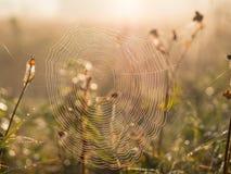 Toile d'araignée pendant le matin Photo libre de droits