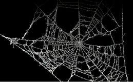 Toile d'araignée poussiéreuse image libre de droits
