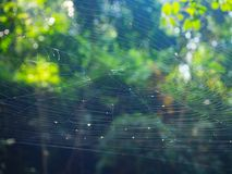 Toile d'araignée sur l'arbre dans la forêt avec la lumière du soleil Photo libre de droits