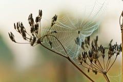Toile d'araignée sur l'herbe Photographie stock libre de droits