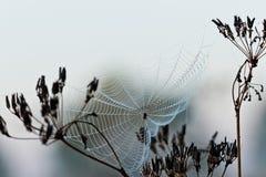 Toile d'araignée sur l'herbe Image stock