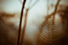 Toile d'araignée sur l'herbe Photo stock
