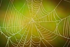 Toile d'araignée sur l'herbe Photos stock