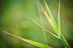 Toile d'araignée sur l'herbe Photographie stock