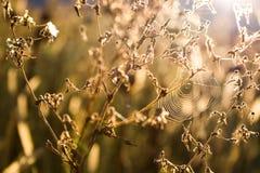 Toile d'araignée sur l'usine photographie stock libre de droits