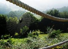 Toile d'araignée sur la montagne images libres de droits
