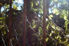 Toile d'araignée sur une barrière photos stock