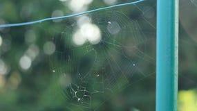 Toile d'araignées Image libre de droits