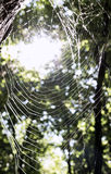 Toile d'araignées Image stock