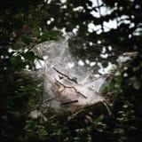 Toile d'araignées photographie stock