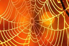 Toile d'araignées B Photo stock