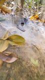 Toile d'araignées d'entonnoir avec une araignée Photos libres de droits