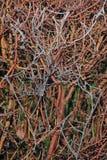Toile d'araignées gelée Photo libre de droits