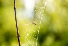 Toile d'araign?e au soleil photographie stock libre de droits