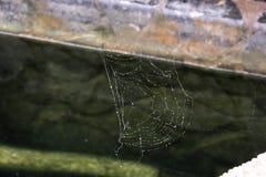Toile d'araign?e en gros plan images stock