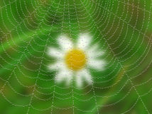 Toile d'araignée avec des baisses sur le fond blured. Images stock