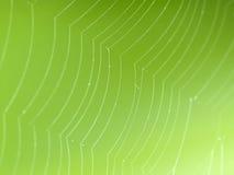Toile d'araignée avec le fond vert Image stock