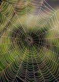 Toile d'araignee à la lumière du soleil Photographie stock