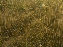 Toile d'araignee Photographie stock libre de droits